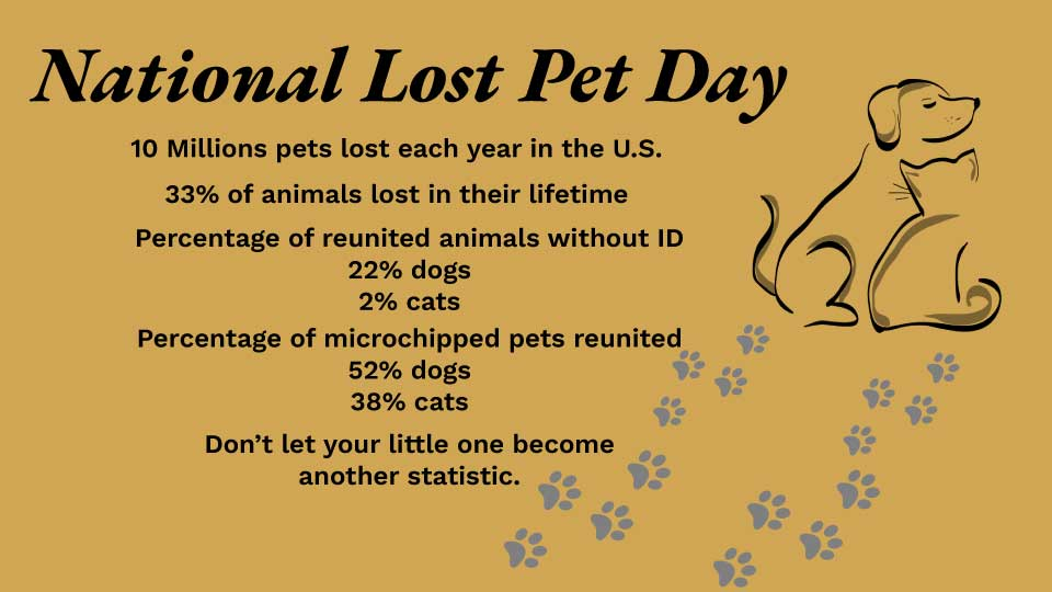 National Lost Pet Day